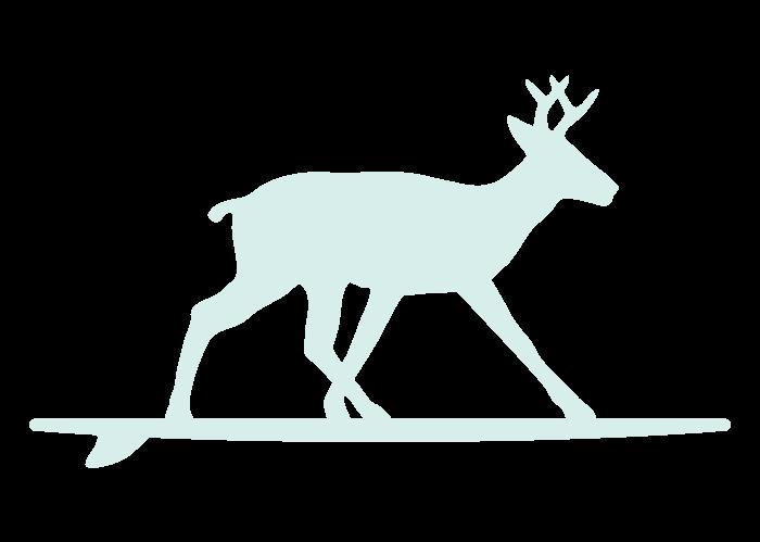 surfing-deer-seafoam-deer