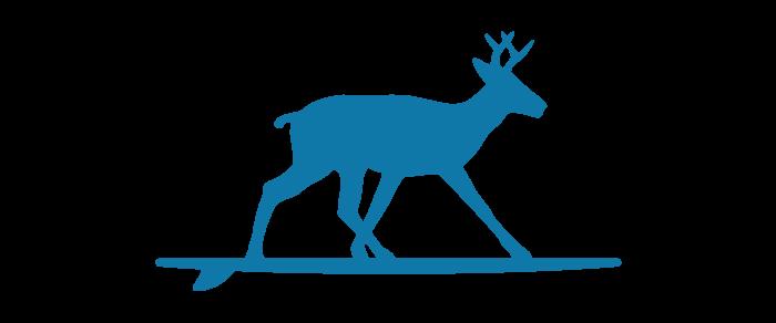 surfing-deer-blue